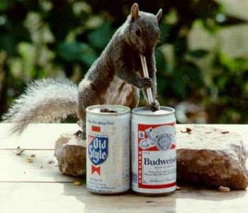 drunk_squirrel.jpg